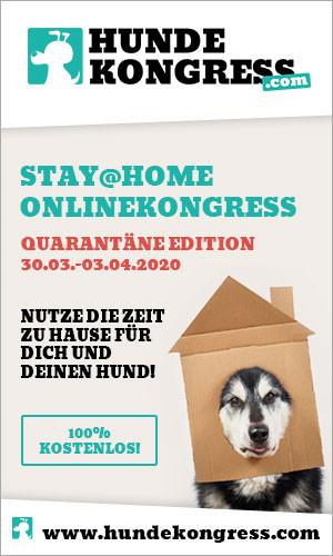 Der kostenlose Stay@Home-Hundekongress