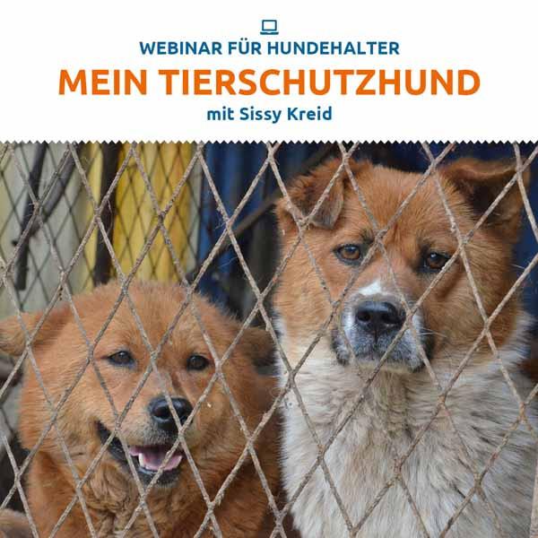 Webinar Tierschutz